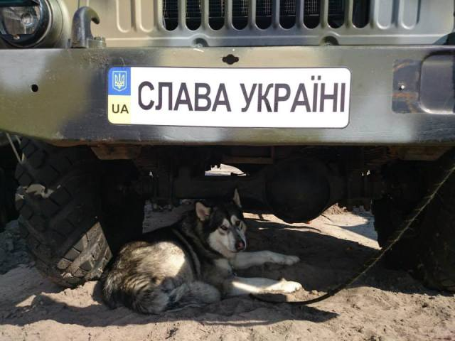One of the guard dogs of Ukrainian soldiers. Photograph by MoD of Ukraine.