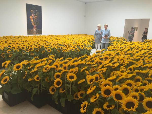 Sunflower memorial in Amsterdam for the victims of flight MH17 downed in the fields of eastern Ukraine 1 year ago today. Source
