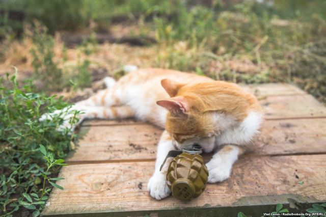 A cat plays with a training F-1 grenade. Photo by Vlad Lemm. Source