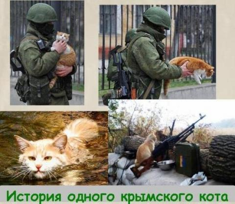 """The story of one Crimean cat."""